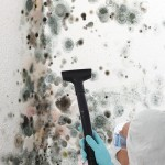 Black-Mold-Remediation-Joliet