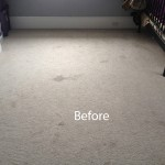 Cranberry Juice Stain Removal Joliet A