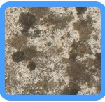 Water-Mold-Removal-Joliet